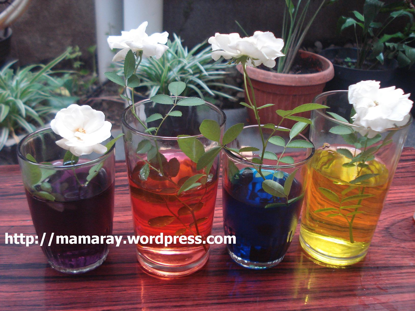 Percobaan Membuat Bunga Berwarna Warni Mamarays Blog